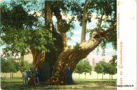 istanbul-arbre-janissaires-1