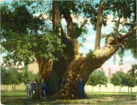 istanbul-arbre-janissaires-1a
