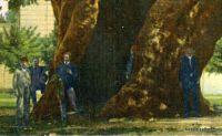 istanbul-arbre-janissaires-1b