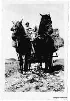 yalova-chevaux-1
